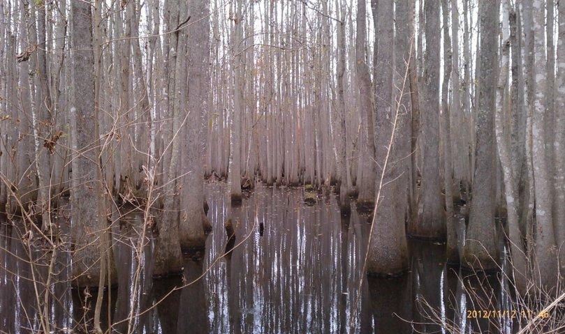swamp-near-whitehall-landing