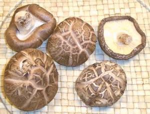 Shiitaki Mushroom